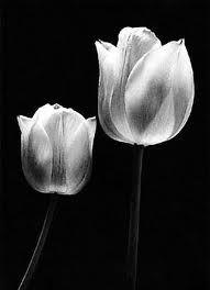 tulip tattoo - Google Search