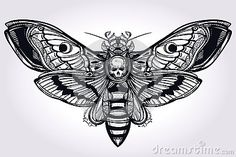 Deaths head hawk moth hand drawn silhouette.