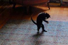 Top 10 Cats That Dance Like Michael Jackson  Kitty is one Smooth Criminal  #MichaelJackson #Caturday #dancedancedance