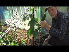 ▶ Der richtige Anbau von Schlangengurken - YouTube