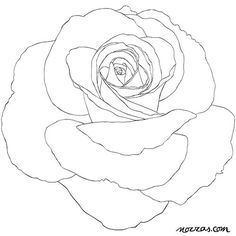 Image result for coloring pages for adults roses