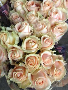 Avalanche 'Pearl' Roses...Sold in bunches of 20 stems from the Flowermonger the wholesale floral home delivery service.