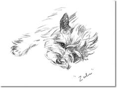 Lucy Dawson - Book Plate From Dogs Rough and Smooth by Lucy Dawson -  Lucy Dawson Cairn Terrier Zulu Painting