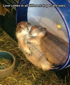 cute-love-hamster-hug-love-cage
