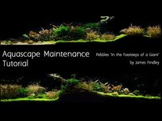 8 best aquascaping maintenance images on pinterest aquascaping