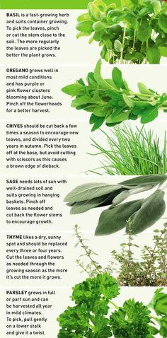 How to grow herbs in baskets Readers Digest New Zealand Healing Herbs, Medicinal Herbs, Vegetable Garden, Garden Plants, Container Gardening, Gardening Tips, Growing Herbs, Edible Garden, Kraut