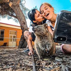 Doppelselfie   : Wie ihr vielleicht mitbekommen habt konnten wir (vor allem Babsi) nicht genug kriegen von den Quokkas gestern auf Rottnest Island   Darum wollten wir euch unser Doppenselfie nicht vorenthalten  1 x mit unserem Handy   1 x mit einer Action Cam  : #quokka #rottnestisland #weareinlove #wirsindverliebt #vrabsi #aufanderenwegen #selfie #quokkaselfies #australia #spass #fun #withmywife #iloveyou #gopro #action #perth #travellove #reisenmachrglücklich #reisenfetzt #reiselust… Quokka, Rotten, Perth, Gopro, Instagram Accounts, Selfie, Action Cam, Fashion Backpack, Australia