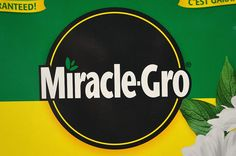 """""""The grass seed company Scotts Miracle-Gro announced at its shareholder meeting this past week that they would be having employees testing genetically modified grass seed in their yards. Is that legal? Yes.  Because it's been approved as environmentally safe?  Nope; because it falls through the cracks of a rattletrap regulatory system."""" - Professor Glenn Davis Stone http://fieldquestions.com/2014/02/01/gm-grass-goes-yard/"""