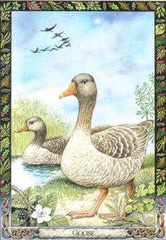 Goose - Druid Animal Oracle Deck by Stephanie Carr-Gomm, Philip Carr-Gomm, Will Worthington