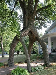 When trees get friendly :)