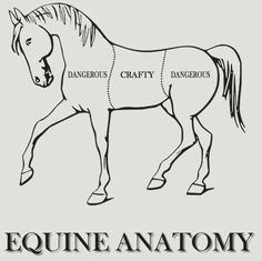 """Equine anatomy, according to Sherlock Holmes.  (This is actually based on an Ian Fleming quote about horses being """"dangerous on both ends and uncomfortable in the middle."""")"""