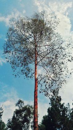 Alifia's capture ♡ #tree #trees #blue #sky