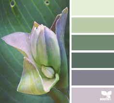 I am always partial to a combo of green and violet - budding hues