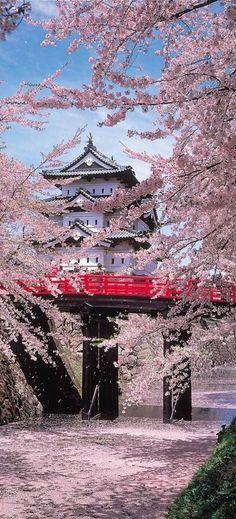 Hirosaki Castle with cherry trees,Aomori,Japan