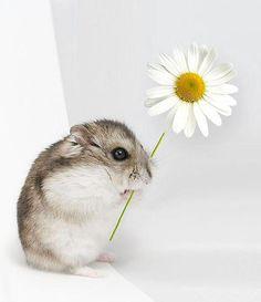 I prefer seeds to flowers - #hamsters #hamster