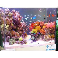 Amazing Mixed Reef Tank, Owner Unknown #instareef #reefpack #reeftank #marinetank #coralreeftank #allmymoneygoestocoral #reefpacknewengland #reefers4reefers #reefrevolution  Partners * @bestaquarium * @creatures.of.the.big.blue * @suko_reef * @shantytownmayor * @reefscape