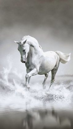 This is a photo of a beautiful horse in the water.