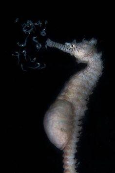 Category 4. International Behaviour For underwater photos of natural marine life behaviour, taken anywhere in the world.RUNNER UP: 'Good luck my babies' - Tammy Gibbs