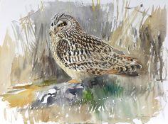 Owl by Lars Jonsson, renowned bird artist & ornithologist, Swedish, Watercolor Bird, Watercolour Painting, Bird Artists, Wildlife Art, Flocking, Bird Feathers, Pastel, Birds, Coups
