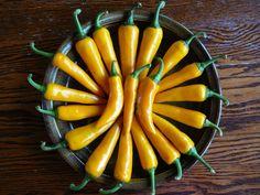 Rare & endangered heirloom varieties of vegetables, herbs & flowers. Chile, Hot Pepper Recipes, Pepper Seeds, Some Like It Hot, Stuffed Hot Peppers, Carrots, Pineapple, Herbs, Bulgarian