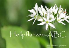 Heilpflanzen-ABC: Jede Pflanze hat eine ganz eigene Wirkung, hier habe ich einige aufgezählt, übersichtlich und alphabetisch geordnet.