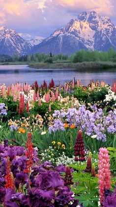 Travel Discover These 21 Natural Places Prove How Colorful and Beautiful Our World Is Wildflower Heaven Grand Teton National Park Wyoming USA Beautiful World, Beautiful Places, Beautiful Pictures, Beautiful Gardens, Beautiful Scenery, Beautiful Norway, Beautiful Beautiful, Beautiful Flowers, Beautiful Moments