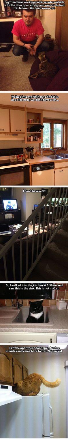 #Cat #animals - When People Find Random Cats Inside Their Homes Crazy Cats, Cats Too Funny, Cat Eating, Cat Food, Cats Ha, Lol Cats, Crazy Cat Lady, Cat Inside, Cat Burglar