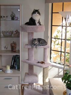 Customer Trees - Cat Tree Plans - How to Build Cat Furniture - Do-it on build your own cat house, easy to build toys, fast cat house, easy to build bench, easy to build barn, easy to build chest, easy to build computer desk, realistic cat house, easy to build chair, easy to build bird cages, easy to build garden, clean cat house, colorful cat house, easy to build bee hive, easy to build furniture, easy to build coffee table, easy to build dog kennels, easy to build cabin, easy to build boat, easy to build shed,