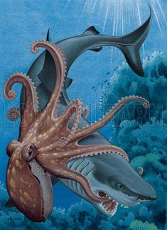 shark fighting octopus - Google Search