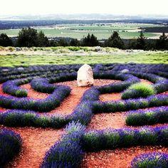 Labyrinth. Lavender Garden. Mt Shasta. CA.