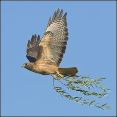 this would be the perfect tattoo with the hawk holding the kids birth flowers. Love it.
