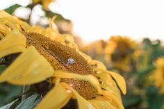 Sunflower Engagement Session - Fly Free Photography // Alberta Couples // Engagement Photography // Summer Engagement // Engagement Inspiration // Sunflower Fields // Alberta Weddings // Alberta Couples // #albertaweddingsocial #flyfreephotography #couples #engagementsessionideas #engagementring #sunflowers Engagement Couple, Engagement Session, Engagement Photos, Engagement Inspiration, Wedding Inspiration, Sunflower Fields, Free Photography, Our Wedding Day, Krystal