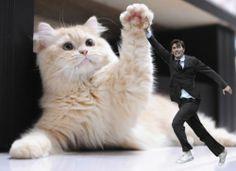 David hi 5's a cat.  David Tennant in Places he shouldn't be.
