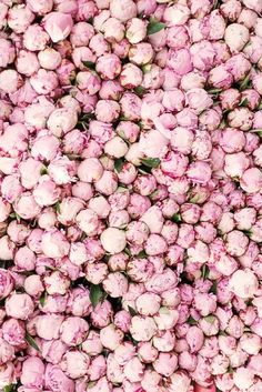 Pink Peonies. Find more inspiration, beauty and fashion at HMSJewels.com