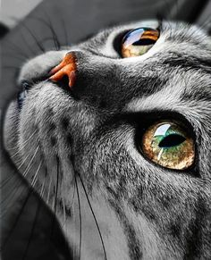 It's in their eyes that their magic resides. #cateyes #happycats #cats_of_day #cat_imatges #myesadoctor #esa #cats_of_ig #kitties #pleasantcats #catlovers #catsofgram #meowsandwoofs #funpetloveclub #ig_catclub #catstocker #bestphotogram_dogs #pawproject #my_loving_pet #magnificent_meowdels #ic_animals #a_world_of_cats #elegant_cats #balousfriends #catworldwide #igclubcats #catsygram #best_cats #cutest_meow #wildlife_seekers #furrendsupclose Cat Day, Cats Of Instagram, Shots, Earth, Awesome, Animals, Animales, Animaux, Be Awesome