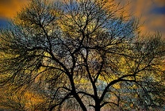 Dark Tree_Photo by Robby Bowles