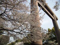 Yasukuni in Spring