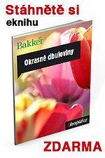 Vše o výsadbě a pěstování jarních cibulovin | iReceptář.cz Blog, Blogging