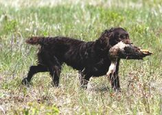 Hunting dogs in my future.