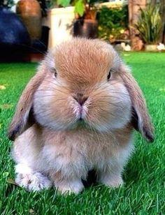 Cheeks at critical levels of cuteness.