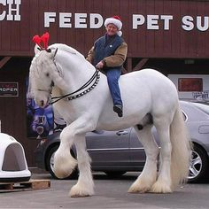 get rid of the rider and the red headpiece, throw on a horn & there you have it...the perfect unicorn