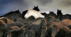 Freya, het witte paard van dat beroemd is geworden door de foto van Laurens Aaij die er in 2006 de Zilveren Camera mee won, is dood. Op de foto stond het paard tussen andere paarden ingesloten door het water, meldt Omrop Fryslân.