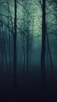 Dark Forest - The iPhone Wallpapers