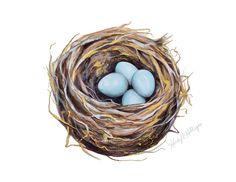 Bird's Nest Illustration