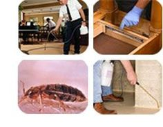 It is only natural for a homeowner to instinctively reach out for the bug spray the moment he or she spots a cockroach in the house. Before you do so, sit back and think one more time. Even though the household pesticide promises to kill the unwanted bugs in your home, it is likely that these chemicals are infesting your home and making it unsafe for your family and yourself.