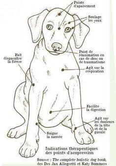 Point d'acupression chez le chien... ..