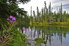 Title  Fireweed On The Clearwater  Artist  Cathy Mahnke  Medium  Photograph - Photography