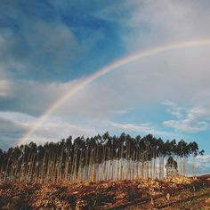 They call South Africa the rainbow nation ~ photo by @vickysimpson7 on Instagram Visit South Africa, Rainbow, Mountains, Nature, Travel, Instagram, Rain Bow, Rainbows, Naturaleza