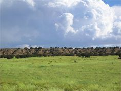New Mexico land for sale - 140 acres at LandWatch.com