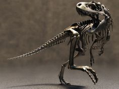 A real fossilized dinosaur skeleton